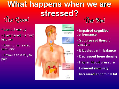 Mood is influenced by immune cells in response to stress
