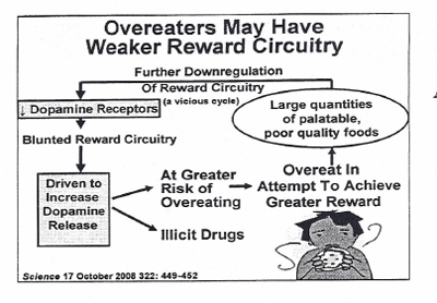 Do Overeaters Have A Weaker Reward Circuitry?