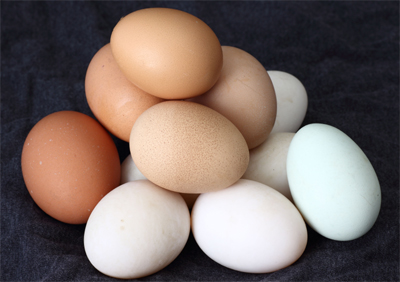 Egg industry ads were and are, false, misleading, and deceptive