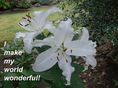 Hope ~ What a wonderful world!