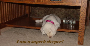 Here is what superb sleepers do