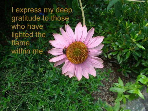 Gratitude for all the abundance